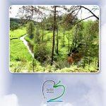 Gamtamokslinės kompetencijos ugdymo(-si) žaliosiose mokymosi aplinkose koncepcija